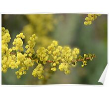Blooming in yellow Poster