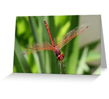 Red Skimmer or Firecracker Dragonfly Closeup Greeting Card