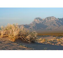 Providence Mts from Kelso Dunes Photographic Print
