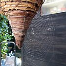 78 - COBWEB IN OUR GARDEN - DAVE EDWARDS - 2009 by BLYTHPHOTO