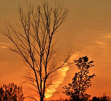 Shadows Tree Dusk by terrebo