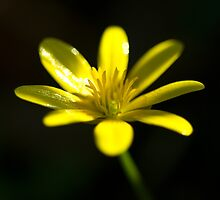 Petals of yellow  by Rob Hawkins