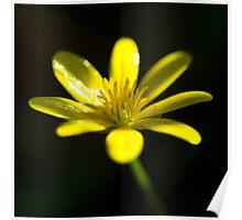 Petals of yellow  Poster