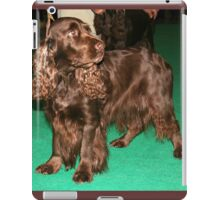 Young Sussex Spaniel iPad Case/Skin
