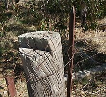 Fence Post by VeeTee