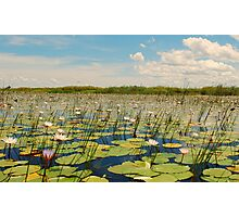 a sea of lilly Photographic Print