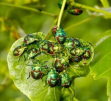 Beetle mania! by Paul Moore