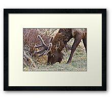 Munchies! Framed Print