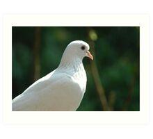 Dove  Art Print
