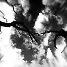 tree perscpective by Tamara Cornell