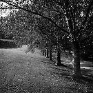 Trees by prbimages