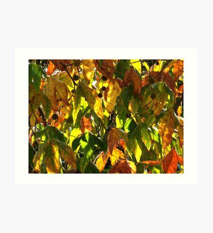Autumn colours 3 Art Print