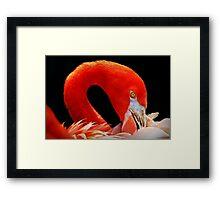 Flamingo's Best 2 Framed Print