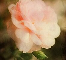 Rose painting... by sylvia128