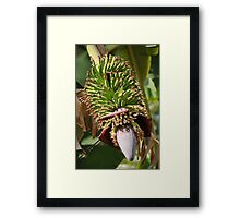 Bananas Flower Framed Print