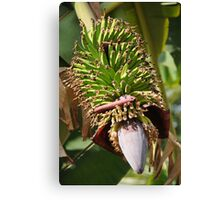 Bananas Flower Canvas Print