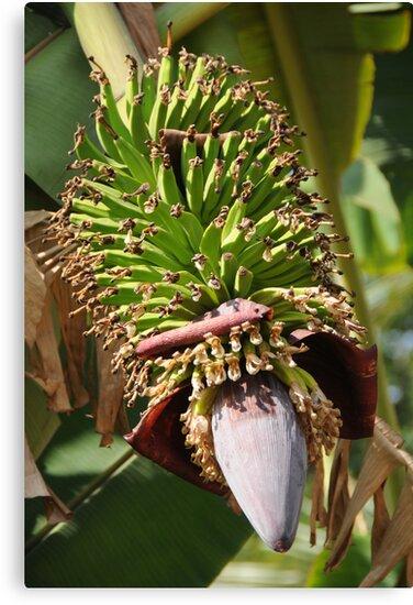Bananas Flower by AravindTeki