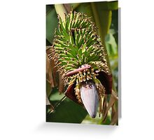 Bananas Flower Greeting Card
