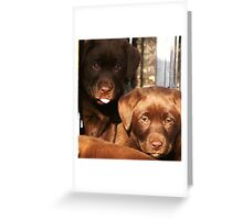 who loves chocolate? Greeting Card