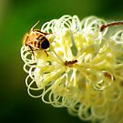 Being a busy Bee by bygeorge