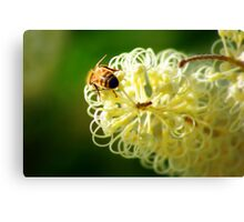 Being a busy Bee Canvas Print