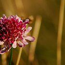 my wildflower     by deannedaffy