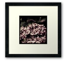 Dreamy Rhododendron Framed Print