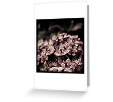 Dreamy Rhododendron Greeting Card