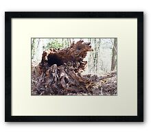 Old growth tree, down Framed Print