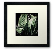 Vintage Green Framed Print