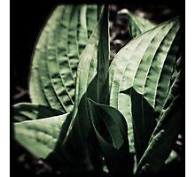 Vintage Green Photographic Print