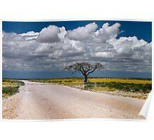 Lone Acacia tree, Etosha National Park, Namibia, Africa. Poster