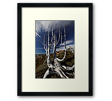 Long Gone Pencil Pines Framed Print
