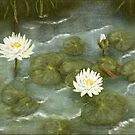 Water lilies by Victoria  _Ts