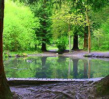 forest pond by Gazzer