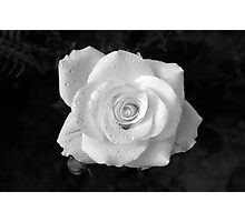 Rose Photographic Print