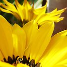 Basking Yellow by mikequigley