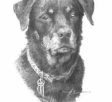 rottweiler drawing  by Mike Theuer