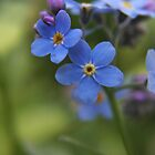 Blue wild flowers by Antanas