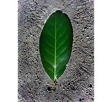 Green Leaf on Ground Photographic Print