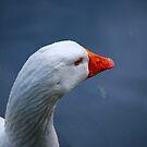 Goose by Rowan  Lewgalon