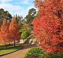 Autumn trees 2 by Chris Cobern