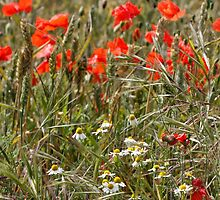 Wildflowers and Grain by AnnDixon