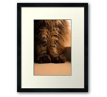 Furry Feet Framed Print