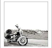 """""""Harley at Hawk Springs, Wyoming"""" by Don Bailey"""