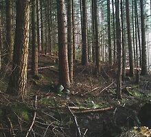 Waldeinsamkeit by Amy Muir