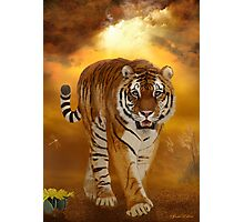 Tiger - After the Storm Photographic Print