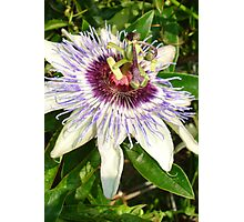 Passiflora Close Up With Garden Background Photographic Print