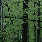 Vivid green woods. by Diego Marando