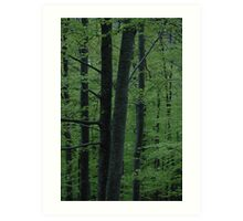 Light green woods Art Print